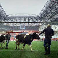 Собственикът на говедата посрещна ЦСКА