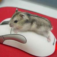 Мишката е новото лого на българския футбол
