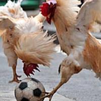 ЦСКА и Локомотив СФ се срещат на 25 юни