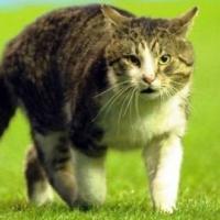 """БФС няма отказ от бистришките """"котета"""""""
