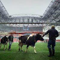 """За какво ви е """"Газпром""""? Всичко е в говедата"""